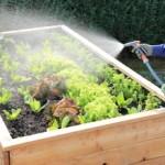 Hochbeet gießen & Hochbeet düngen