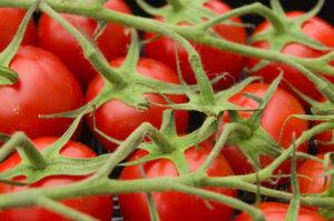Erfolgreich im Hochbeet Tomaten ziehen