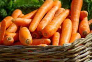 Karotten ertragreich
