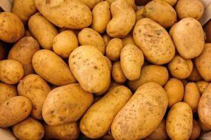 Kartoffeln ertragreich